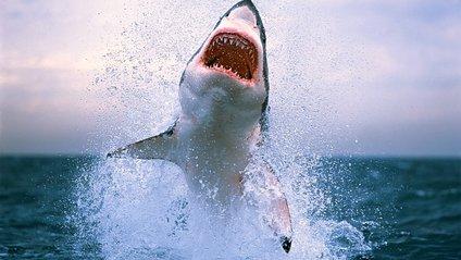 Полювання акули попало на відео - фото 1