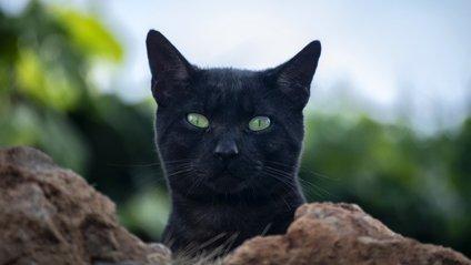 Хитрий кіт підкорив Reddit - фото 1