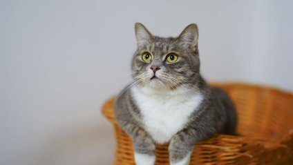 Кумедний кіт підкорив Reddit - фото 1