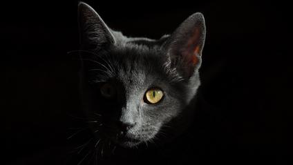 Головоломка з сірою кішкою - фото 1