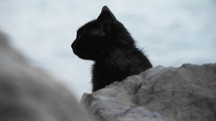 Як чорний кіт став зіркою футбольного матчу - фото 1