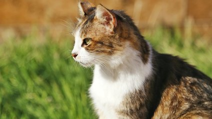 Кішка атакувала полісмена - фото 1