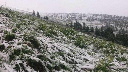 Карпати стало засипати снігом - фото 1