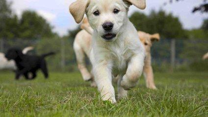 Найкращий варіант дресування собаки – метод нагород - фото 1