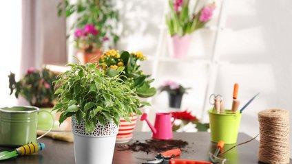 Користь кімнатних рослин дещо переоцінена - фото 1