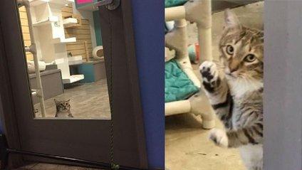 Кота посадили в одиночку за його непокірність - фото 1