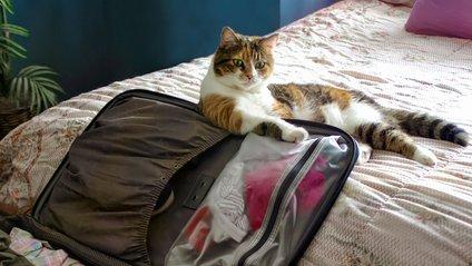 Кіт зник на 5 років - фото 1
