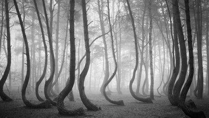 Мальовничі ліси - фото 1