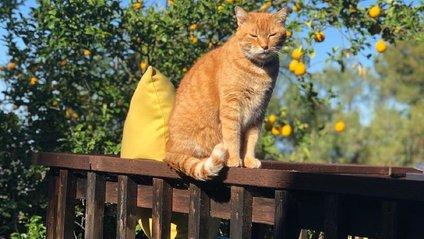 Балакучий кіт вразив мережу - фото 1