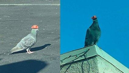 У Лас-Вегасі хтось одягає на голубів маленькі ковбойські капелюхи: курйозні кадри - фото 1