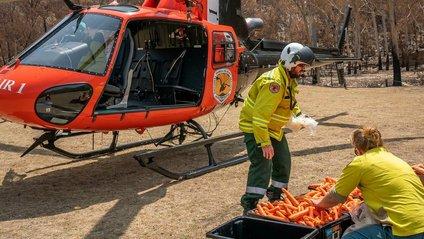 В Австралії з повітря скинули тонни моркви для тварин: фоторепортаж - фото 1