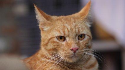 Дивний кіт вразив мережу - фото 1
