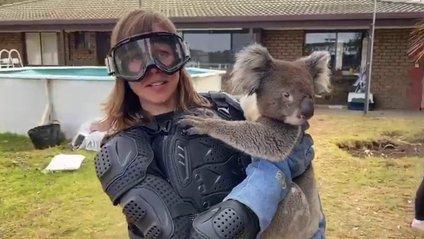 Журналістці сказали, що коала надзвичайно небезпечна тварина - фото 1
