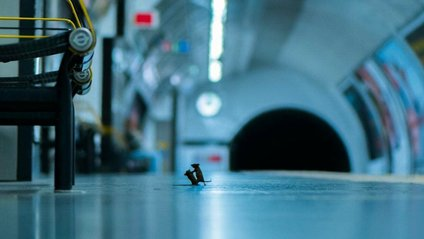 Бійка мишей у лондонському метро: найкраще фото дикої природи за 2019 - фото 1