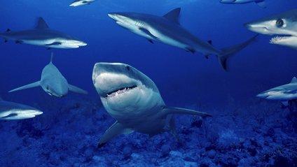 Хлопець вирішив нагодувати 50 голодних акул: відео не для слабкодухих - фото 1