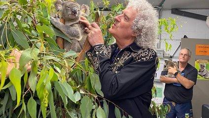 """Гітарист Queen зіграв сольний """"концерт"""" для коали - фото 1"""