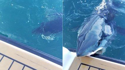 Акула - фото 1