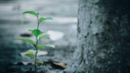 Джефф Безос заснував екологічний фонд - фото 1