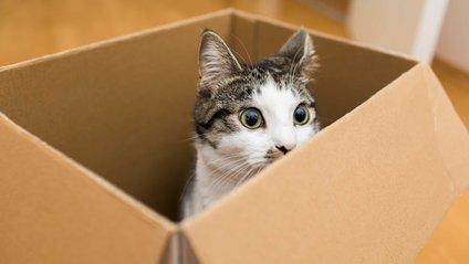 А ваш кіт любить сидіти у коробці? - фото 1