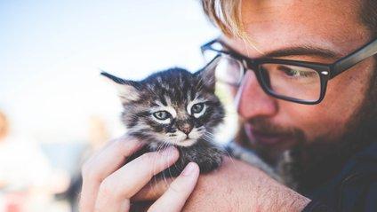 Коти допомагають позбутись стресу - фото 1