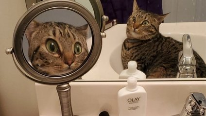 Реакція кота безцінна - фото 1