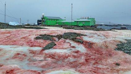 В Антарктиді сніг став багряного кольору: фотофакт - фото 1