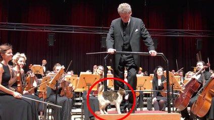 У Стамбулі кішка вийшла на сцену під час виступу оркестру і зіркою шоу - фото 1