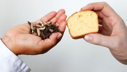 """Вчені приготували кекс з """"масла"""" комах - фото 1"""