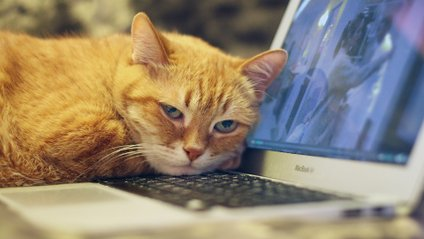 Як тварини заважають працювати вдома - фото 1
