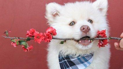 Як вигуляти собаку на карантині - фото 1