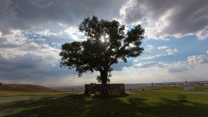 В Європі вибрали дерева року: вражаючі кадри - фото 1