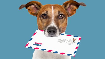 Собака приносить листи двох дівчаток-подружок - фото 1