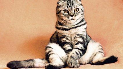 Як розіграти кота - фото 1
