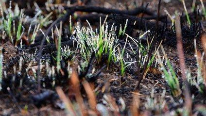 Спалювати траву - шкідливо для довкілля та нас самих - фото 1