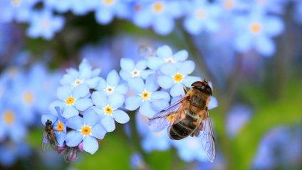 які звуки видає бджола - фото 1