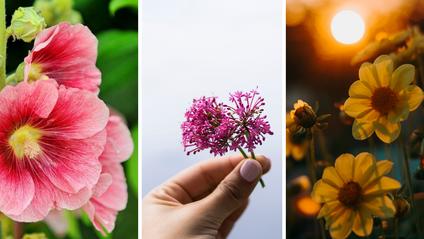 українські квіти - фото 1