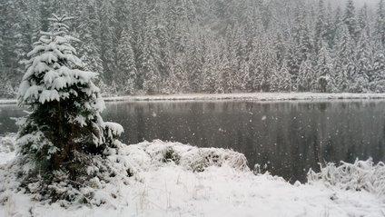 Сніг в Карпатах - фото 1
