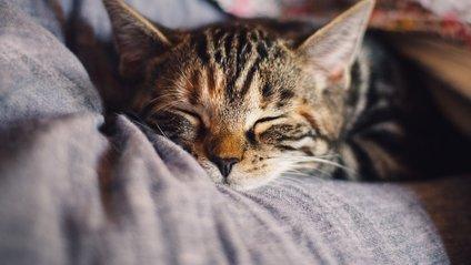 Схвильований кіт підкорив мережу - фото 1