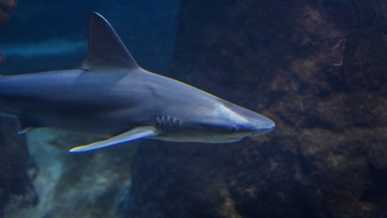 Блакитна акула випробувала човен - фото 1