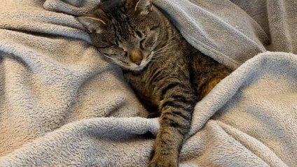 Кішка вирішила відправитися у подорож - фото 1