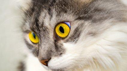 Хропіння кота - фото 1