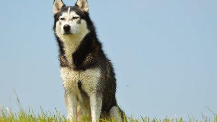 Дуже суворий собака - фото 1