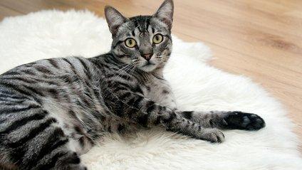 Кіт у шафі з одягом - фото 1
