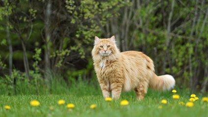 Оленятко вирішило дружити з котом - фото 1