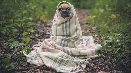 Коли дуже любиш ковдру - фото 1