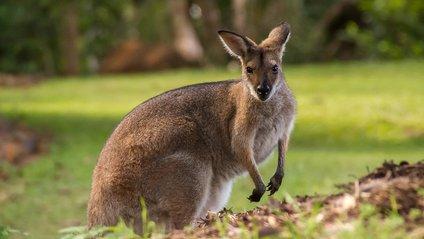 Провалена місія порятунку кенгуру - фото 1