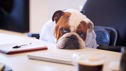 Ці поради допоможуть побороти сонливість на роботі - фото 1