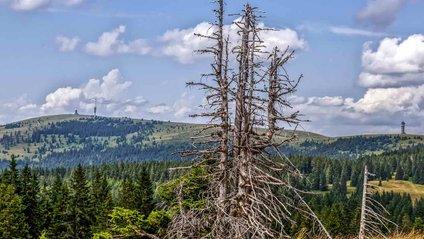 Ліси - фото 1