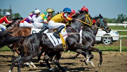 Перегони закінчились несподіваним вчинком коня - фото 1