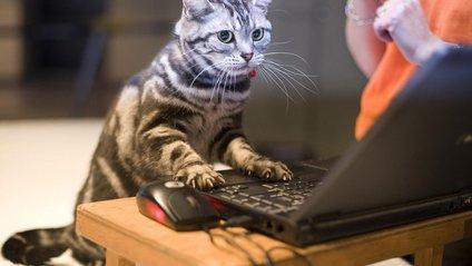 У США кіт отримав запрошення на вибори - фото 1
